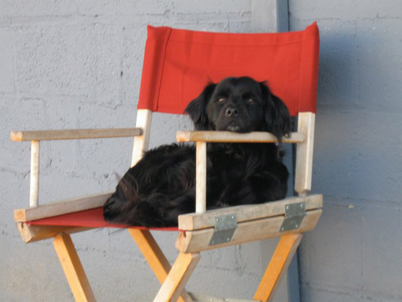 Little black pup rests head on arm of red director's chair at dog daycare in Nashville