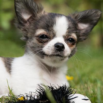 testimonial-dog-portrait